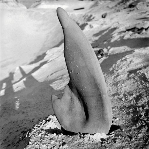 Charlotte Perriand. Grès de la carrière de Bourron, forêt de Fontainebleau, vers 1935 © Adagp, Paris, 2019 © AChP